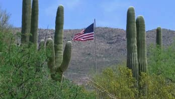 Hundreds of plants at the Saguaro National Park have been microchipped to cut down on the number of stolen saguaros, valued at about $100 a foot.