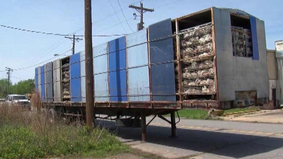Trailer full of dead chickens left in Arkansas neighborhood