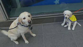 'The Daily Briefing' team is helping raise an assistance dog through the non-profit Canine Companions for Independence.
