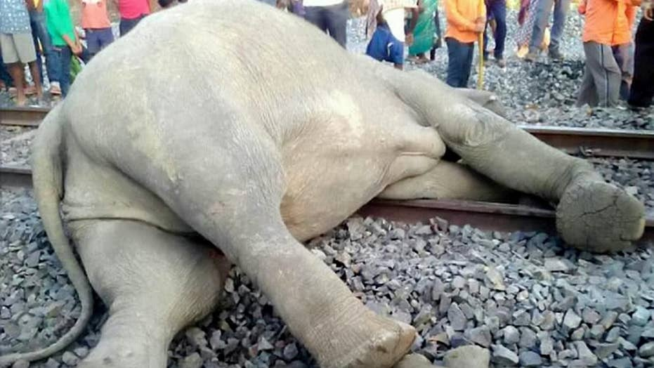 Graphic images: Elephants struck by train