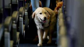 Airlines would be allowed to ban emotional support animals, allow only service dogs under new proposal