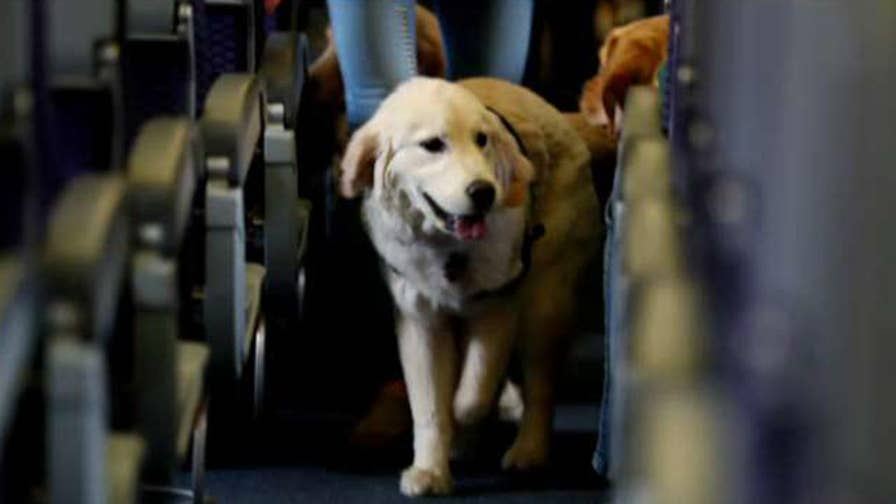 Airline lobby group releases statement about problems posed by animals on flights; Raymond Arroyo shares 'Friday follies' on 'The Ingraham Angle.'