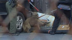 Raw video: Officers wrangle wild coyote in parking lot in South Philadelphia.