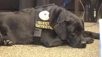 Electronic sniffing dogs are trained to detect a chemical that's baked on to electronics that end up in devices often used to store disturbing instances of child exploitation. Once investigators give the scene a once-over, electronic sniffing dogs go in to smell for what the eye can't see.