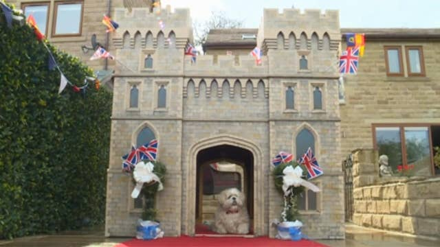 Royal wedding fever goes to the dogs