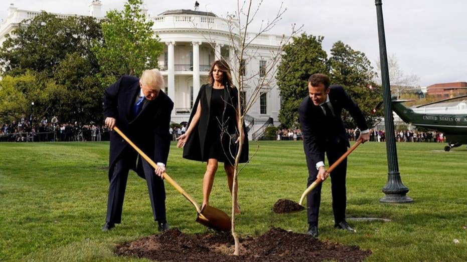 Mystery over Macron's missing White House gift tree solved