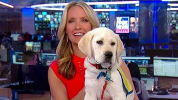 'The Daily Briefing' canine companion Spike launches his own blog 'The Daily Spike.'