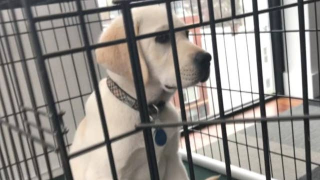Spike learns to get into his kennel