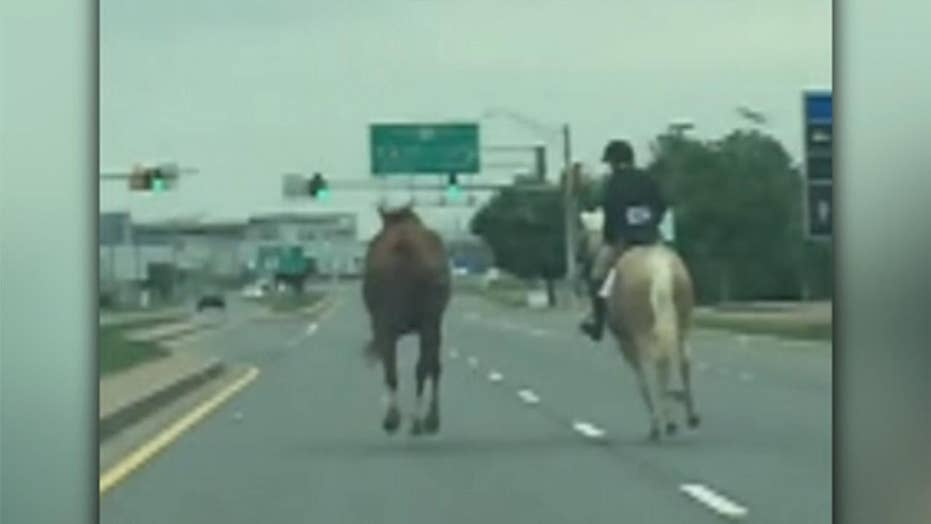 Teen chases down runaway horse on Maryland highway