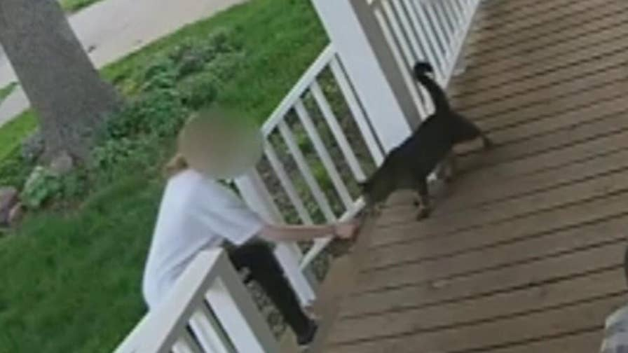 Security camera captures moment a teen grabs a cat and tries to flee to a waiting car.
