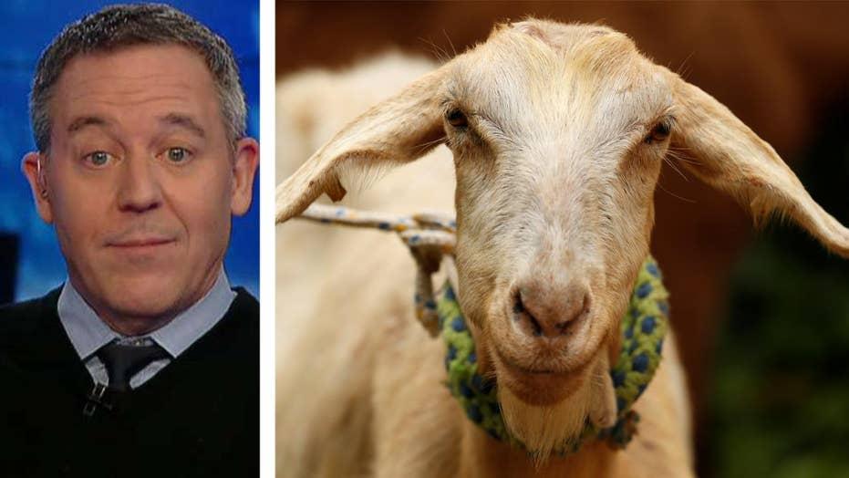 Gutfeld on new rules against comfort animals