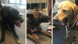 Five military dogs who served the U.S. during deployments overseas were awarded the K-9 Medal of Courage Tuesday on Capitol Hill.