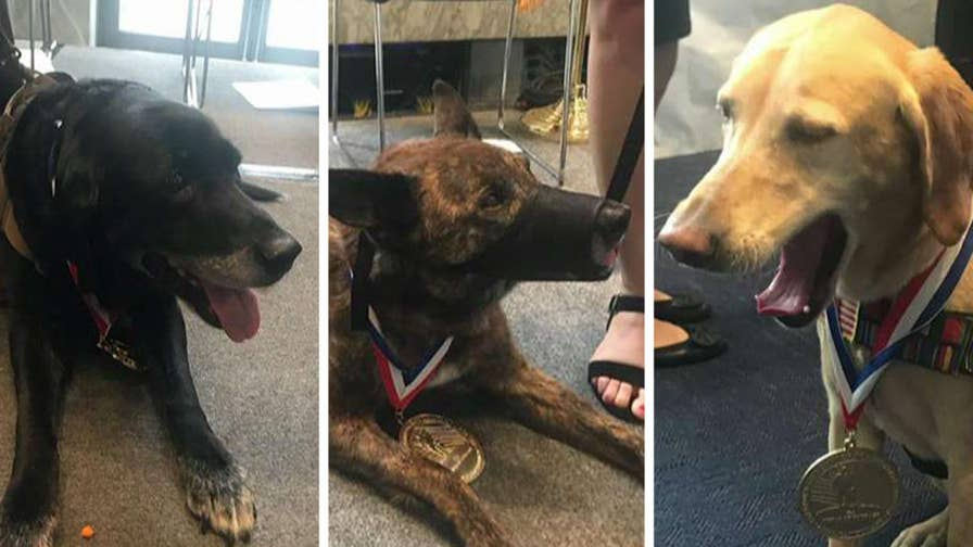 A group of retired military dogs rewarded for their numerous accomplishments while deployed overseas.