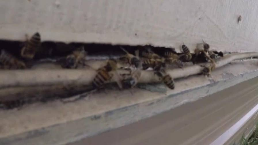 Quick-thinking first responders praised for rescuing man after lawnmower stirred up swarm in Creedmoor, Texas.
