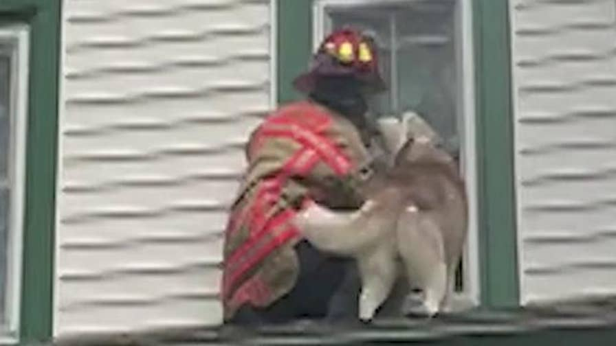 Wells Fire Department Captain Jeff Nawfel saves a grateful dog who managed to get out onto his roof.