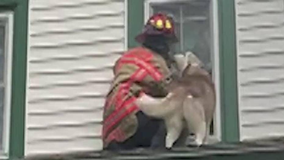 Firefighter gets 'thank you' kiss from dog stuck on roof