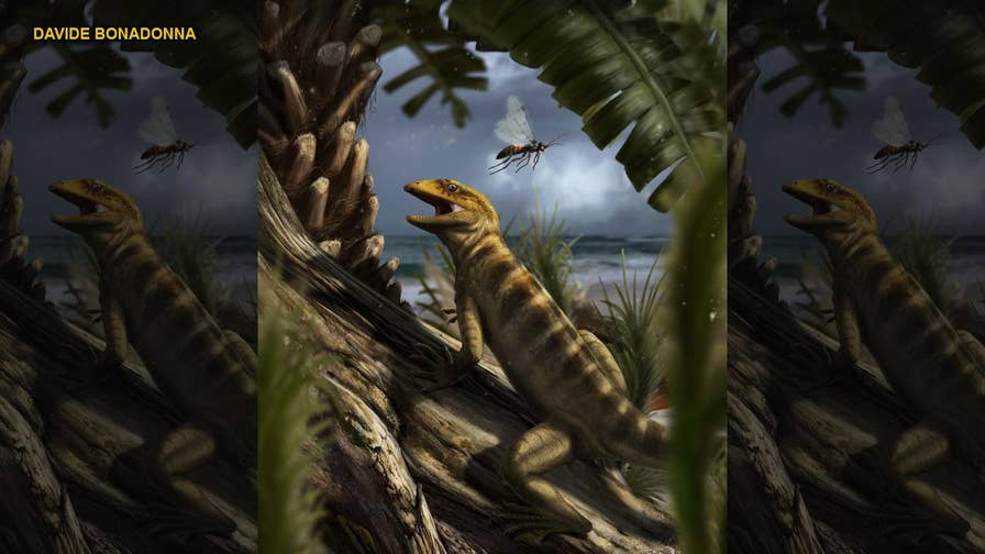 A new study in the scientific journal Nature, gives insight into a 240 million year-old fossil that was recently identified as the 'mother of all lizards,' being the direct ancestor of 10,000 current species of reptiles including lizards and snakes.