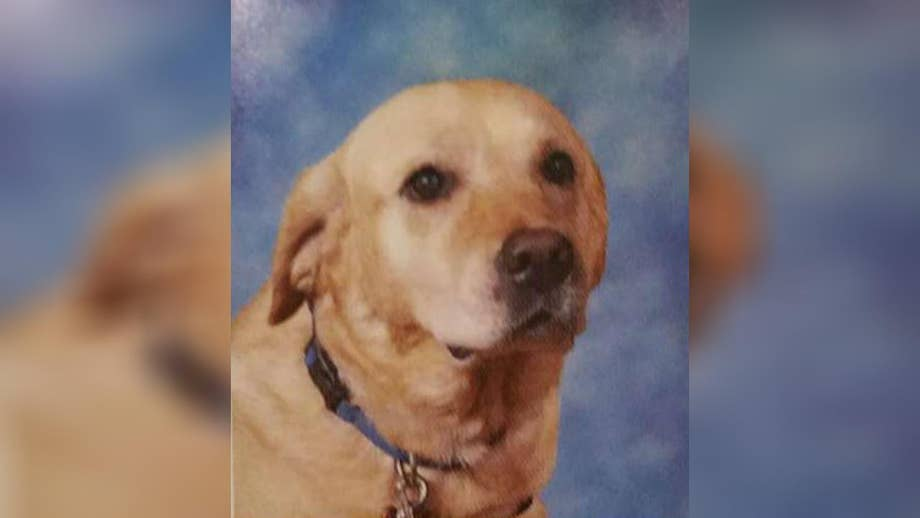 'The Daily Briefing' canine companion dog makes school yearbooks.