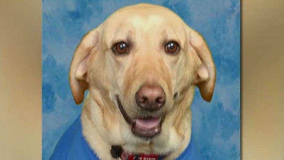 Service dog makes it into school's yearbook