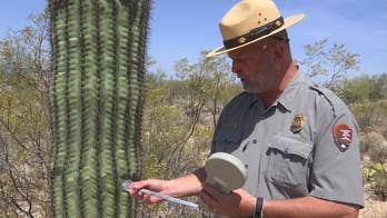 Saguaro National Park chief ranger estimates cactuses are stolen monthly. Rangers hope the technology will deter cactus culprits.