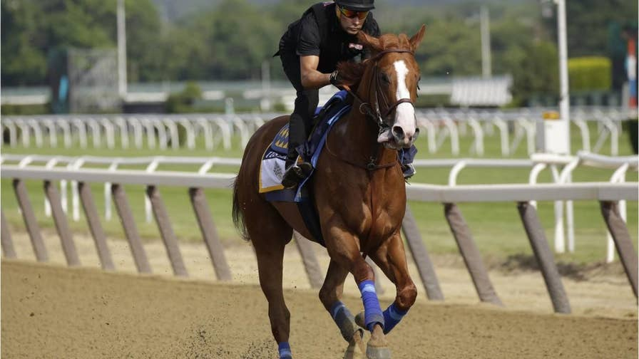 Everything you need to know about racing horse Justify.