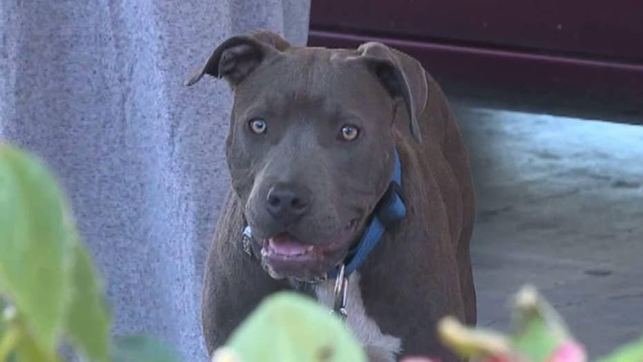 Hero dog saves family from fire