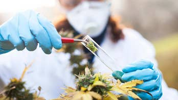 Medical marijuana is still a controversial topic when it comes to doctors recommending it to their cancer patients. Some doctors like Dr. Nick Spirtos, an oncologist from Nevada is looking into whether medical marijuana could turn into an alternative for opioids.