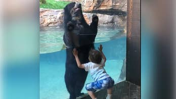 An adorable moment caught on video as a bear at the Nashville Zoo mimics a jumping boy.