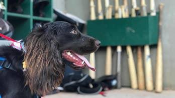 1-year-old dog becomes newest member of South Carolina baseball team