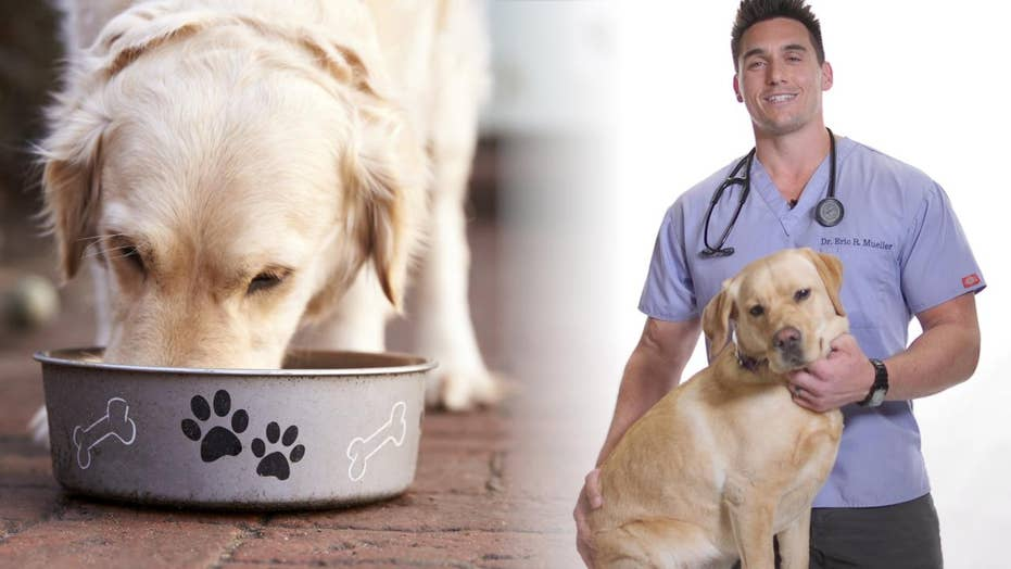 Healthy pets: Dr. Eric Mueller's advice for the summer