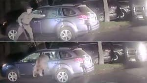 A bear broke into a car in California's Placer County and locked itself in. Police came to the rescue to set it free.