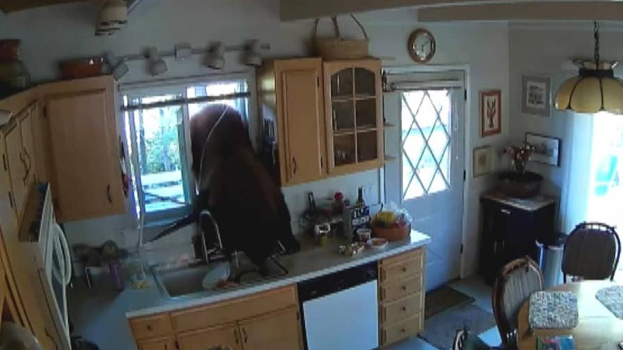 Bear enters California home through kitchen window.