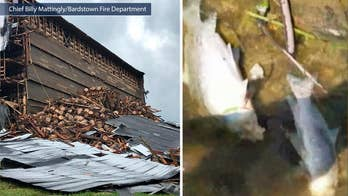 Bourbon from Barton 1792 warehouse collapse spills into nearby waters poisoning fish. Company faces fines from the state of Kentucky