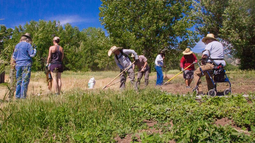 Veterans to Farmers, a farming nonprofit, is helping veterans reintegrate into civilian life, connect with fellow vets and recover from PTSD, by training them to work in agriculture.