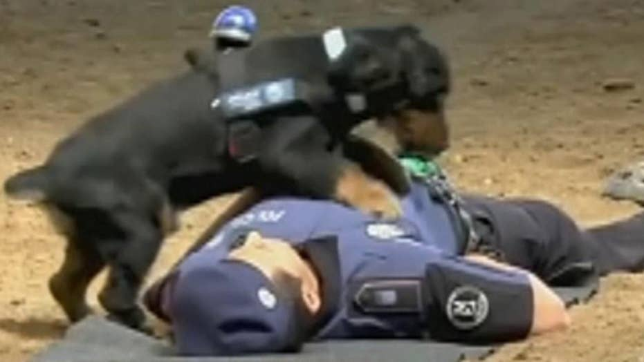 Police dog performs CPR on officer