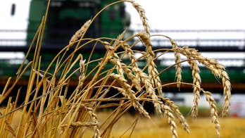 US farmers worry Trump tariffs could hurt business