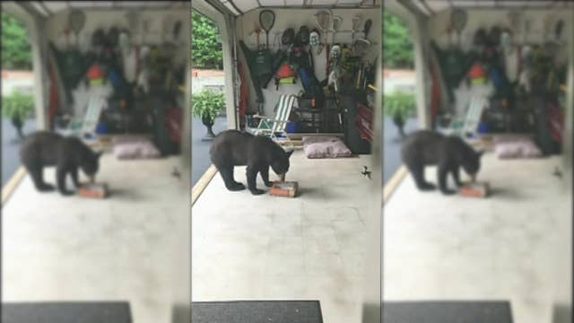 Caught on tape: Black bear steals donuts