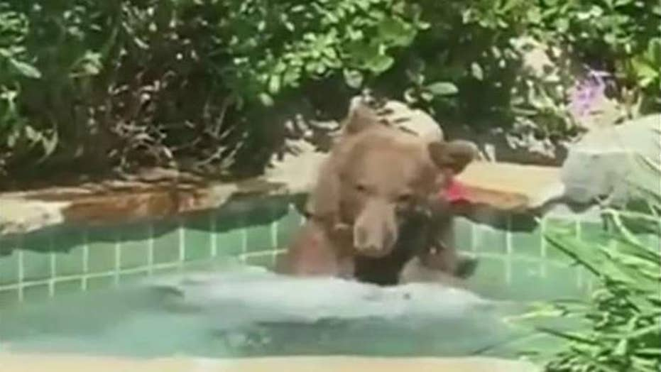 Bear chills out in bubbling hot tub