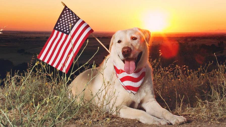 While the 4th of July is a cause for celebration for many Americans, pets may feel differently. Here are some tips to keep your furry friends safe during the holiday.