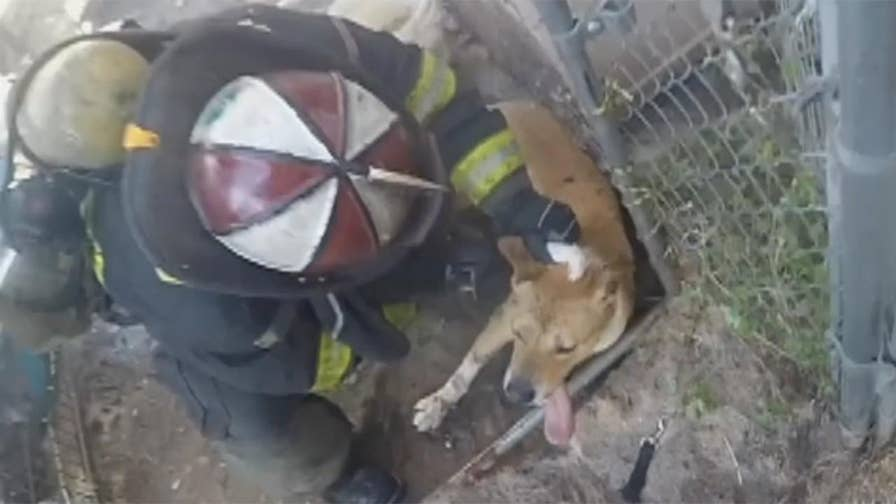 Raw video: Firefighters find and rescue caged dog as they battle blaze at single family dwelling in California.