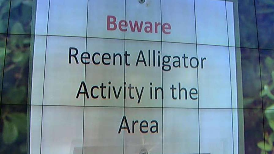 Responding deputy shot the 11-foot gator.