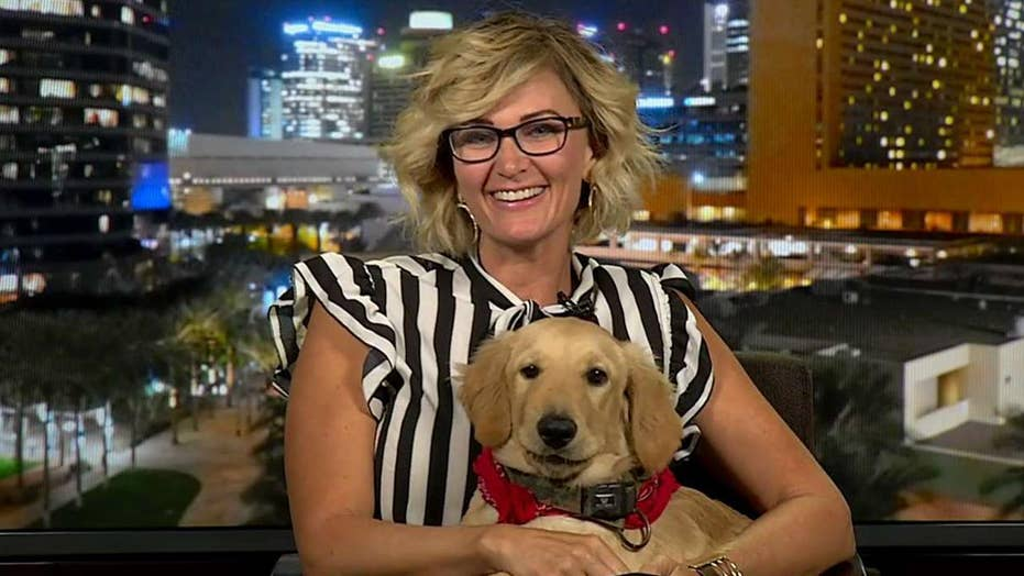 Dog who saved owner from rattlesnake joins 'Fox & Friends'