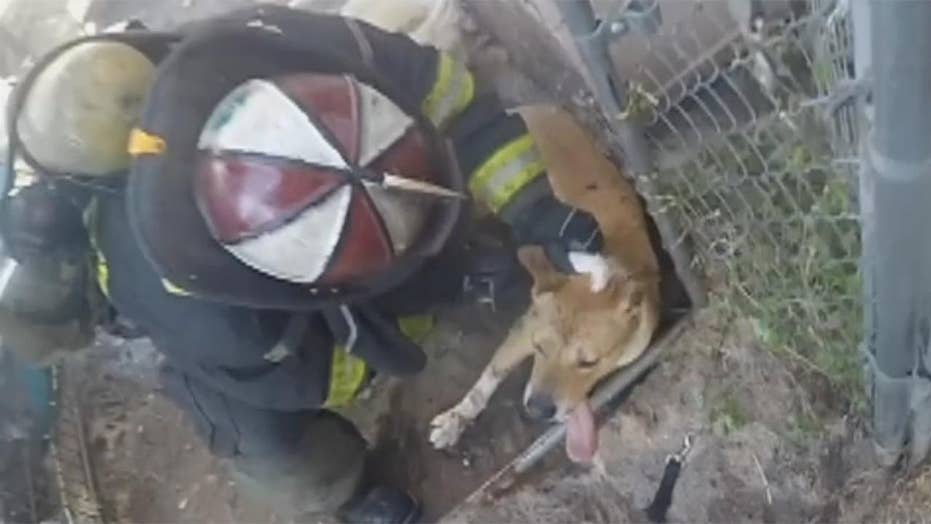 Crews battling intense house fire save caged dog