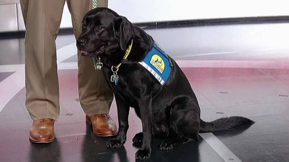 Service dogs changing lives of veterans with PTSD