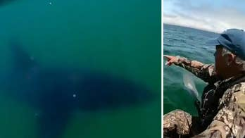 Raw video: Man fishing off the coast of Monterey, California has large shark swim by his kayak twice before swimming away.