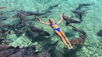 In shocking before and after pictures, California native and Instagram model, Katarina Zarutskie is shown swimming with nurse sharks right before one of the animals attacked her and latched onto her arm.