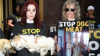 In a recent protest to stop the consumption of dog meat Priscilla Presley held a deceased dog while Kim Basinger held a sign.