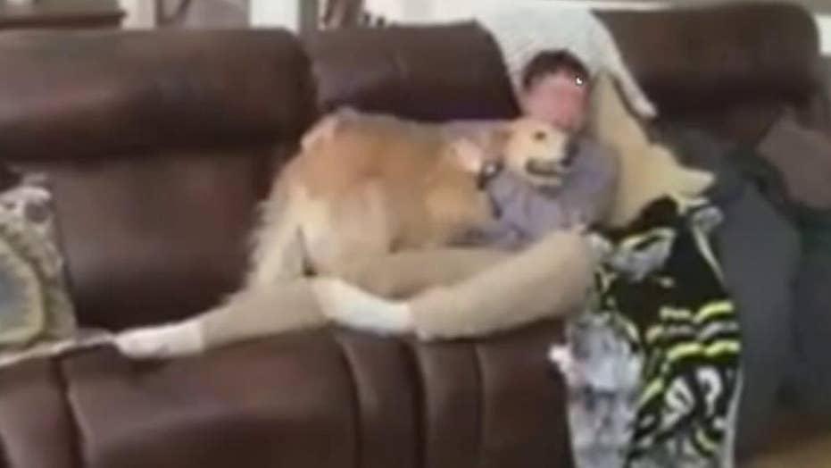 Illinois Army pilot returns home, surprises his dog