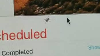 Raw footage shows small arachnid living in the screen of an iMac.