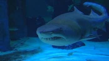 Shark attacks 23-year-old surfer at Hawaii beach